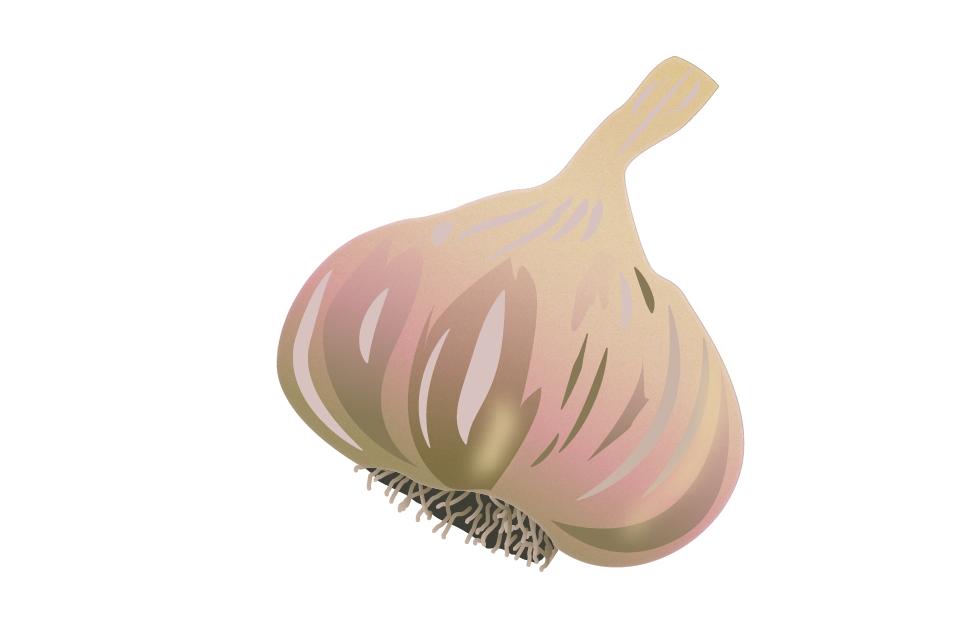 Food 1 >> Food illustration - Lærke Borella